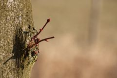 Nieuwe takjes van een boom royalty-vrije stock afbeeldingen