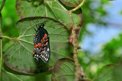 Nieuwe Vleugels Royalty-vrije Stock Fotografie