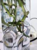 Nieuwe wortels in het water royalty-vrije stock foto