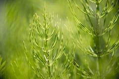Nieuwe zaailingen die in de vroege lente groeien royalty-vrije stock foto