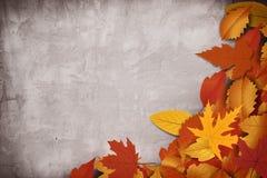 Nieuwe zoete kleur Als achtergrond stock afbeeldingen