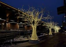 Nieuwjaar` s verlichting in de vorm van een steeg van lichtgevende bomen Stock Fotografie