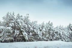 Nieuwjaarboom in landschap van de de winter het bos Mooie winter met sneeuw behandelde bomen Bomen die met rijp en sneeuw worden  Royalty-vrije Stock Fotografie