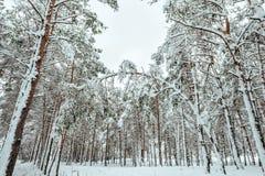 Nieuwjaarboom in landschap van de de winter het bos Mooie winter met sneeuw behandelde bomen Bomen die met rijp en sneeuw worden  Stock Fotografie