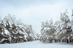 Nieuwjaarboom in landschap van de de winter het bos Mooie winter met sneeuw behandelde bomen Bomen die met rijp en sneeuw worden  Royalty-vrije Stock Afbeeldingen