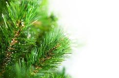 Nieuwjaarboom voor groetkaart stock fotografie