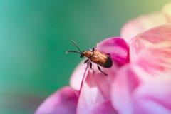 Nieuwsgierig insect Stock Foto's