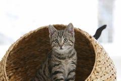 Nieuwsgierig katje Royalty-vrije Stock Afbeeldingen