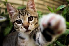 Nieuwsgierig katje Royalty-vrije Stock Foto's