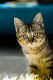 Nieuwsgierig katje Royalty-vrije Stock Fotografie
