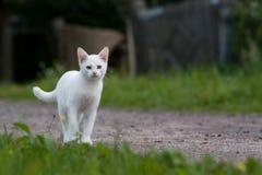 Nieuwsgierig katje Royalty-vrije Stock Foto