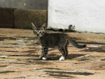 Nieuwsgierig katje die voor het eerst onderzoeken stock fotografie