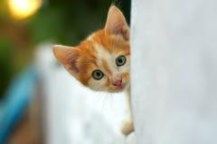 Nieuwsgierig klein katje dat uit van witte muur gluurt stock afbeeldingen