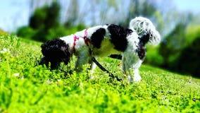 Nieuwsgierig Koekje de hond Royalty-vrije Stock Foto