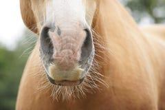 Nieuwsgierig paard stock foto
