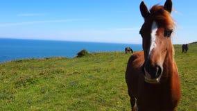 Nieuwsgierig paard voor blauwe overzees royalty-vrije stock foto