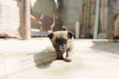 Nieuwsgierig puppy Royalty-vrije Stock Foto