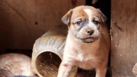 Nieuwsgierig puppy royalty-vrije stock afbeelding