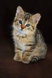 Nieuwsgierig weinig katje Royalty-vrije Stock Foto's