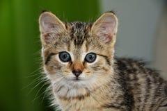Nieuwsgierig weinig katje Royalty-vrije Stock Afbeelding