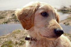 Nieuwsgierige doggie Stock Foto's