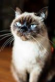 Nieuwsgierige en waakzame mannelijke kat met wijd open ogen royalty-vrije stock foto