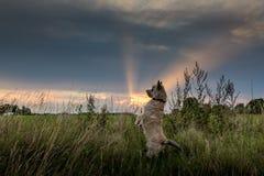 Nieuwsgierige hond stock afbeelding