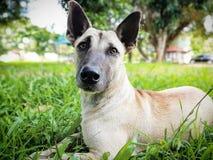 Nieuwsgierige hond Stock Foto's