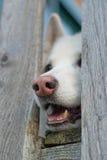 Nieuwsgierige Hond Royalty-vrije Stock Afbeelding