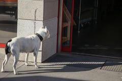Nieuwsgierige hond royalty-vrije stock afbeeldingen