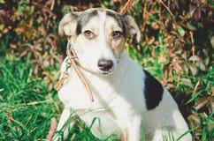 Nieuwsgierige hond die de camera bekijken jong de hondhoofd van het mengelingsras in openlucht in aard het plakken royalty-vrije stock afbeeldingen