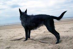 Nieuwsgierige hond die de horizon in detail onderzoekt Royalty-vrije Stock Foto