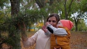 Nieuwsgierige jongen op de spelen van mumwapens met tak en smily in de herfstpark, portret van gelukkige familie stock footage