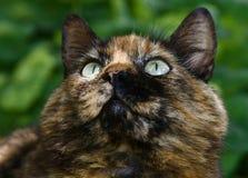 Nieuwsgierige kat Stock Afbeelding