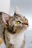 Nieuwsgierige kat Royalty-vrije Stock Afbeeldingen