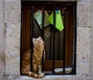 Nieuwsgierige kat Royalty-vrije Stock Foto