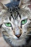 Nieuwsgierige Kat Stock Afbeeldingen