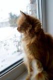 Nieuwsgierige kat op een venster Stock Afbeeldingen