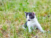 Nieuwsgierige katjeszitting op gras Stock Afbeeldingen