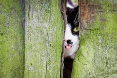 Nieuwsgierige kleine kat met groene ogen en tong uit mond royalty-vrije stock afbeeldingen