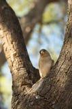 Nieuwsgierige mus op een boomtak Royalty-vrije Stock Afbeelding