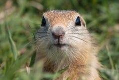 Nieuwsgierige neus Stock Foto