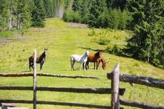 Nieuwsgierige paarden op de groene heuvel, het mooie paardenscène weiden Royalty-vrije Stock Foto