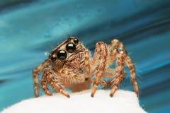 Nieuwsgierige spin Stock Foto
