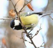Nieuwsgierige Vogel Royalty-vrije Stock Fotografie
