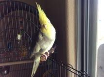 Nieuwsgierige Vogel Stock Fotografie