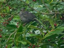 Nieuwsgierige Vogel Royalty-vrije Stock Foto