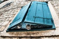 Nieuwsgierige waarnemers - twee katten die door turkooise vensterzonneblinden gluren Stock Foto's