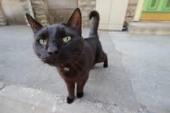 Nieuwsgierige zwarte kat Stock Foto's
