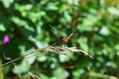 Nieuwsgierigheid van het wilde leven stock foto's